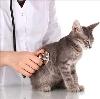 Ветеринарные клиники в Качканаре